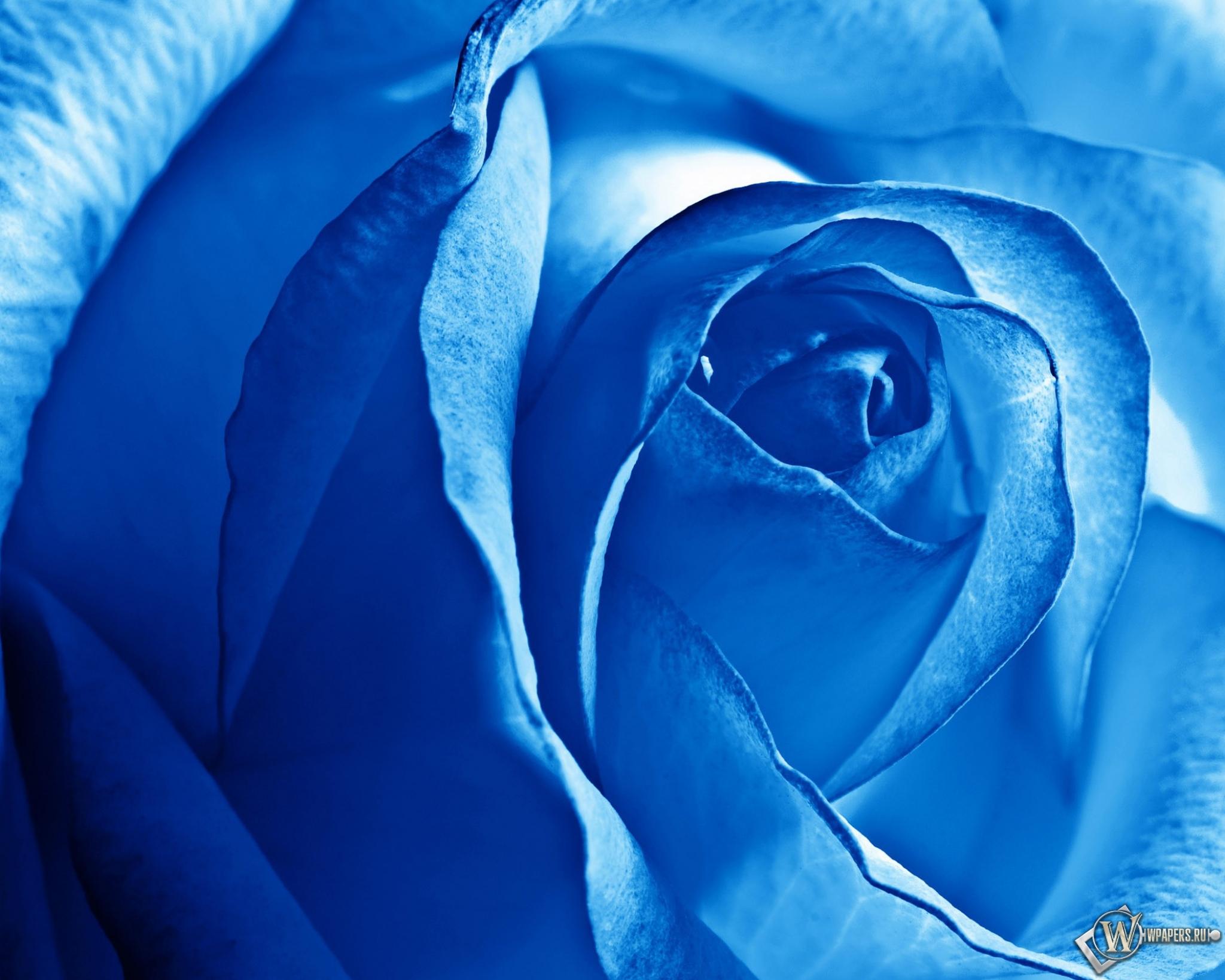 скачать синий цвет:
