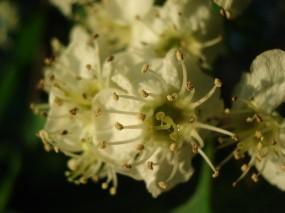 Обои Цветы: Макро, Пестики, Тычинки, Цветы