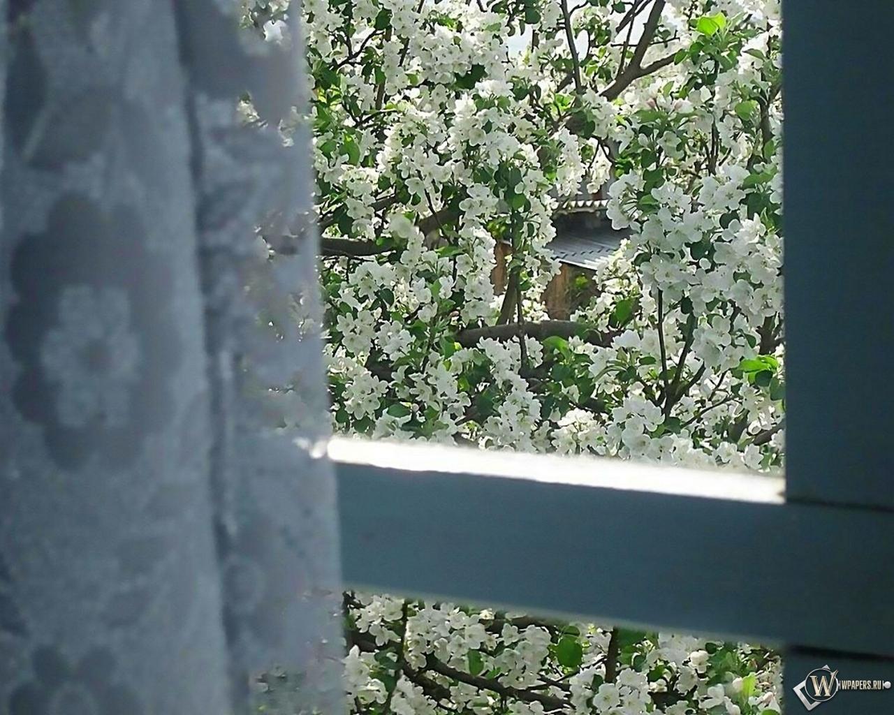 Обои яблоня за окном на рабочий стол с