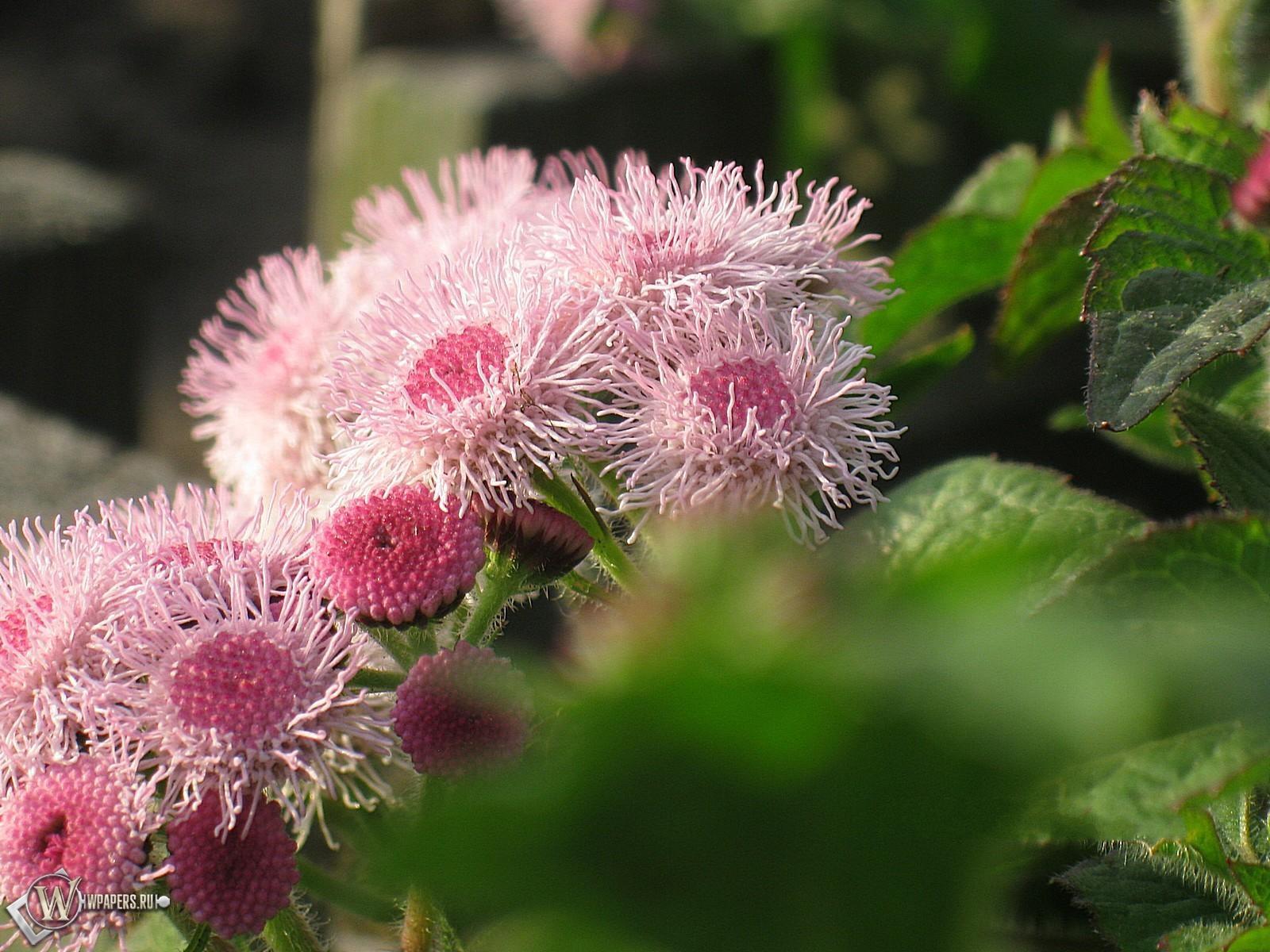 Садовые цветы 1600x1200