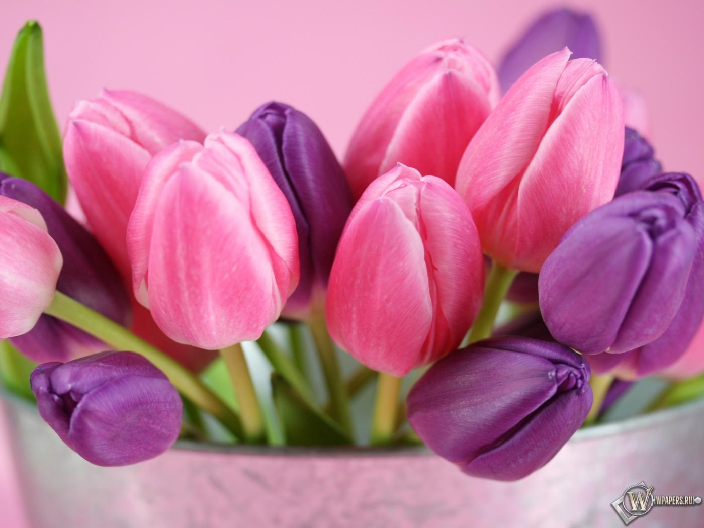 Тюльпаны на рабочий стол
