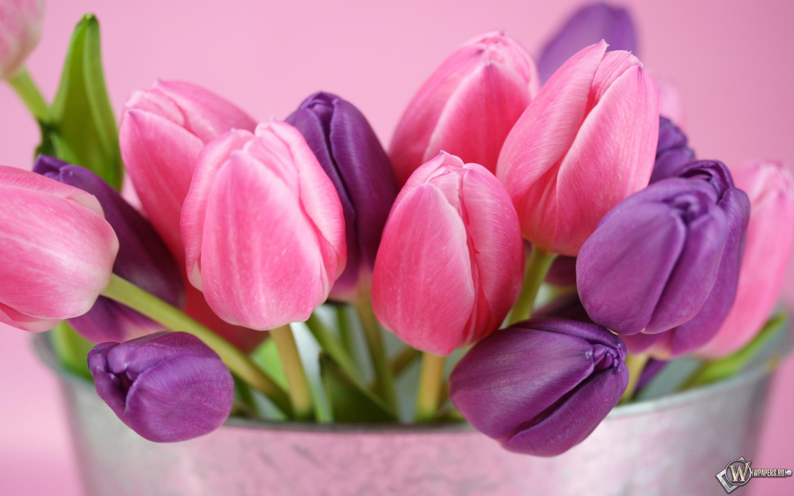 рабочего стола 2560х1600 (16:10) бесплатно ...: wpapers.ru/wallpapers/Plants/Flowers/9057/2560-1600...