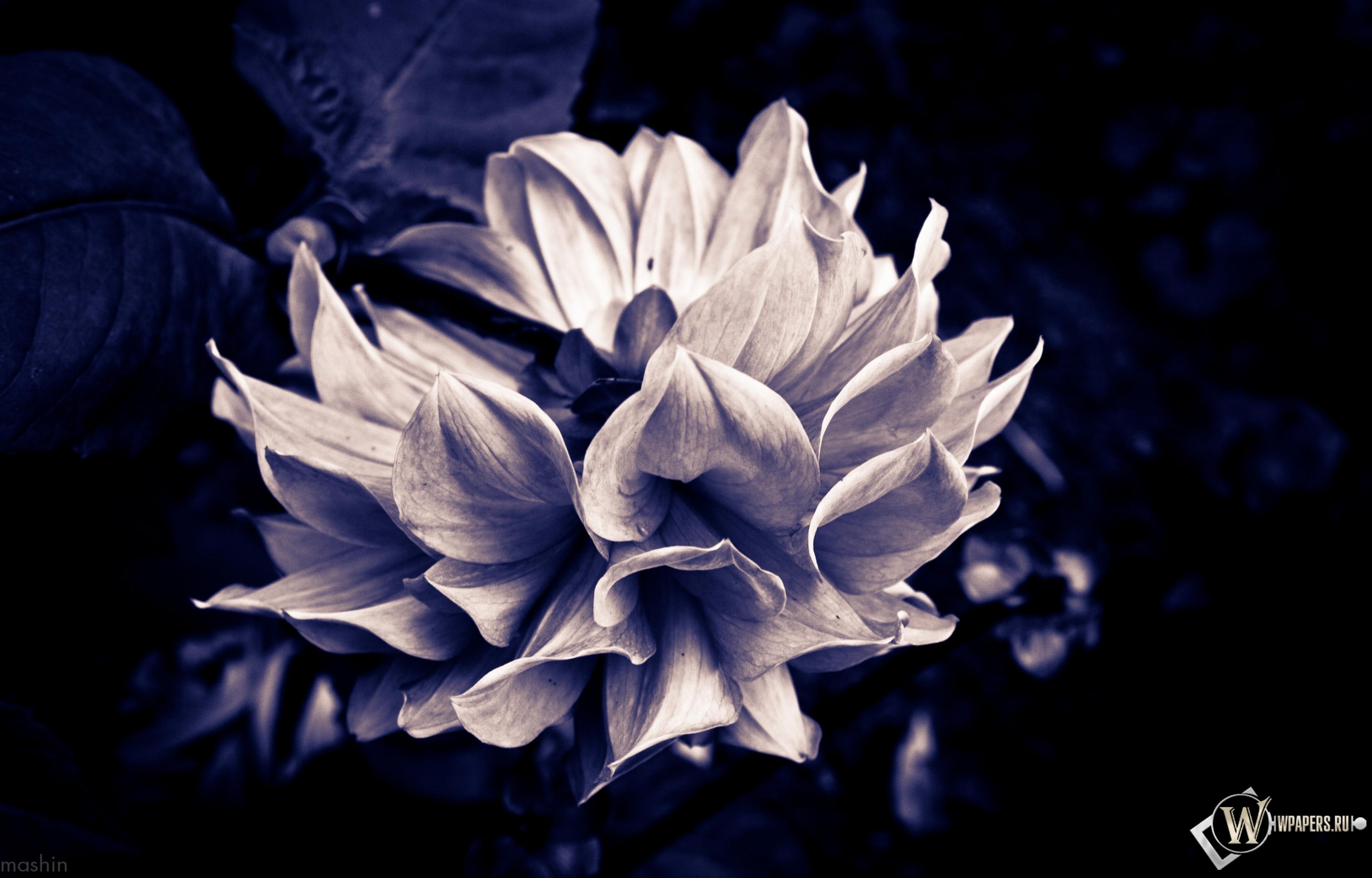Готический цветок 3200x2048