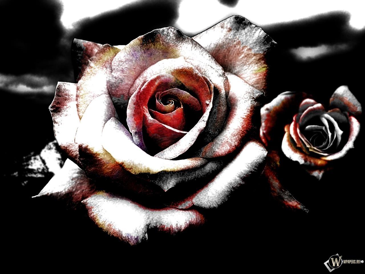 Розы 1280x960