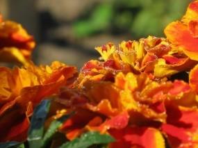 Обои Утренняя роса: Роса, Цветы, Растения