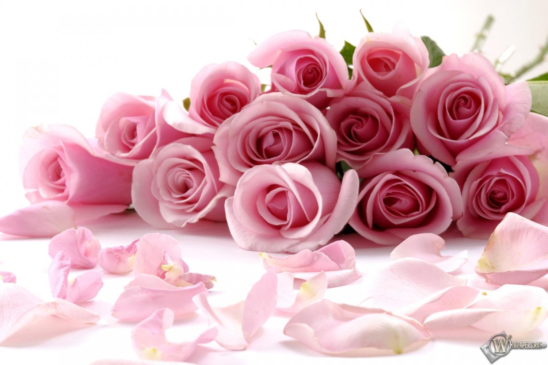 Розовые розы розы розовый букет