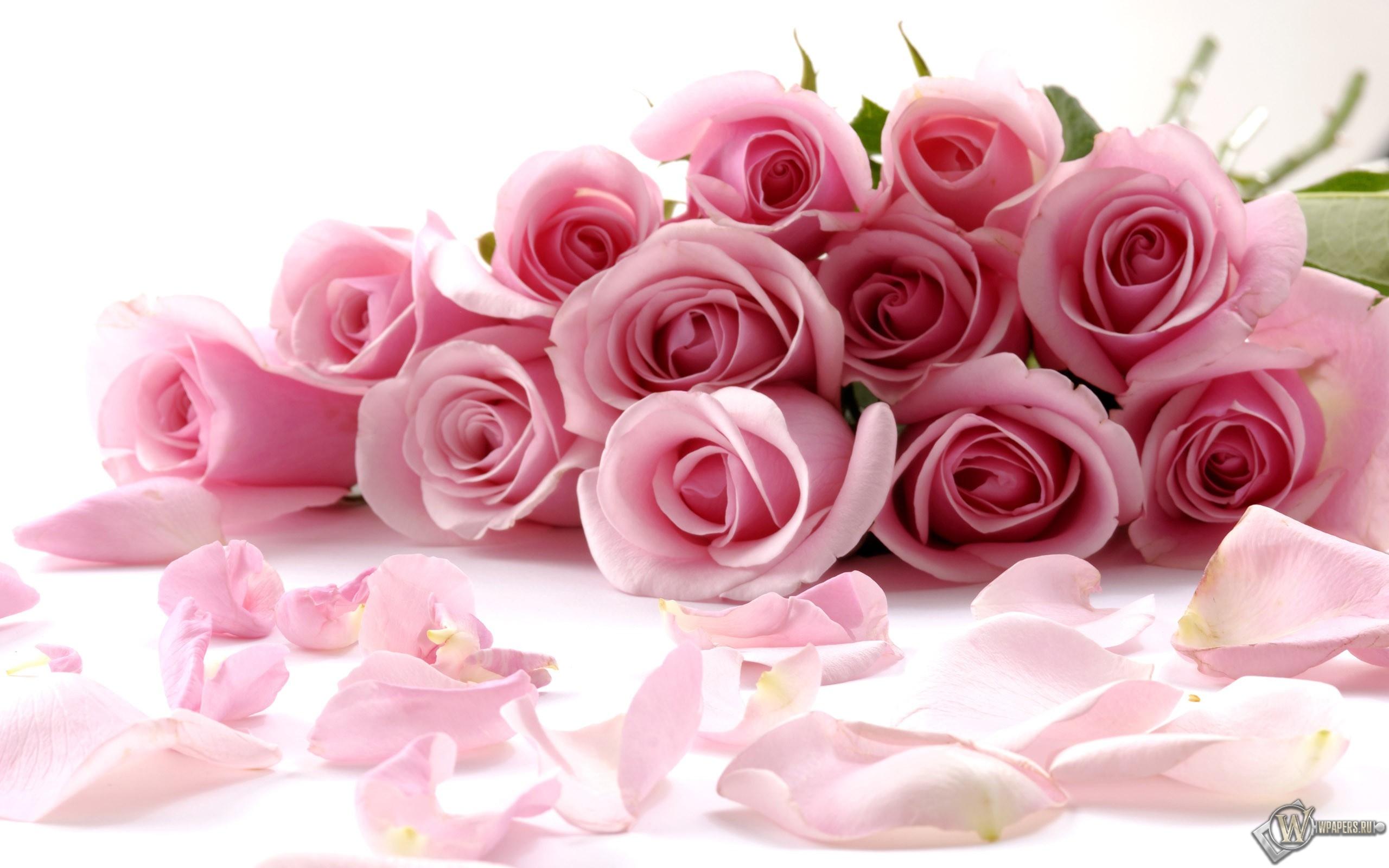 Обои розовые розы розы розовый