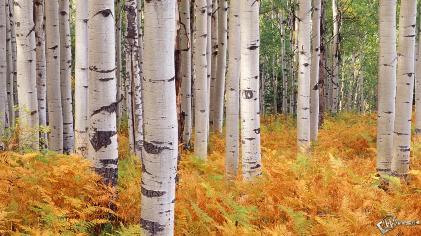 Картинки на рабочий стол лес осень