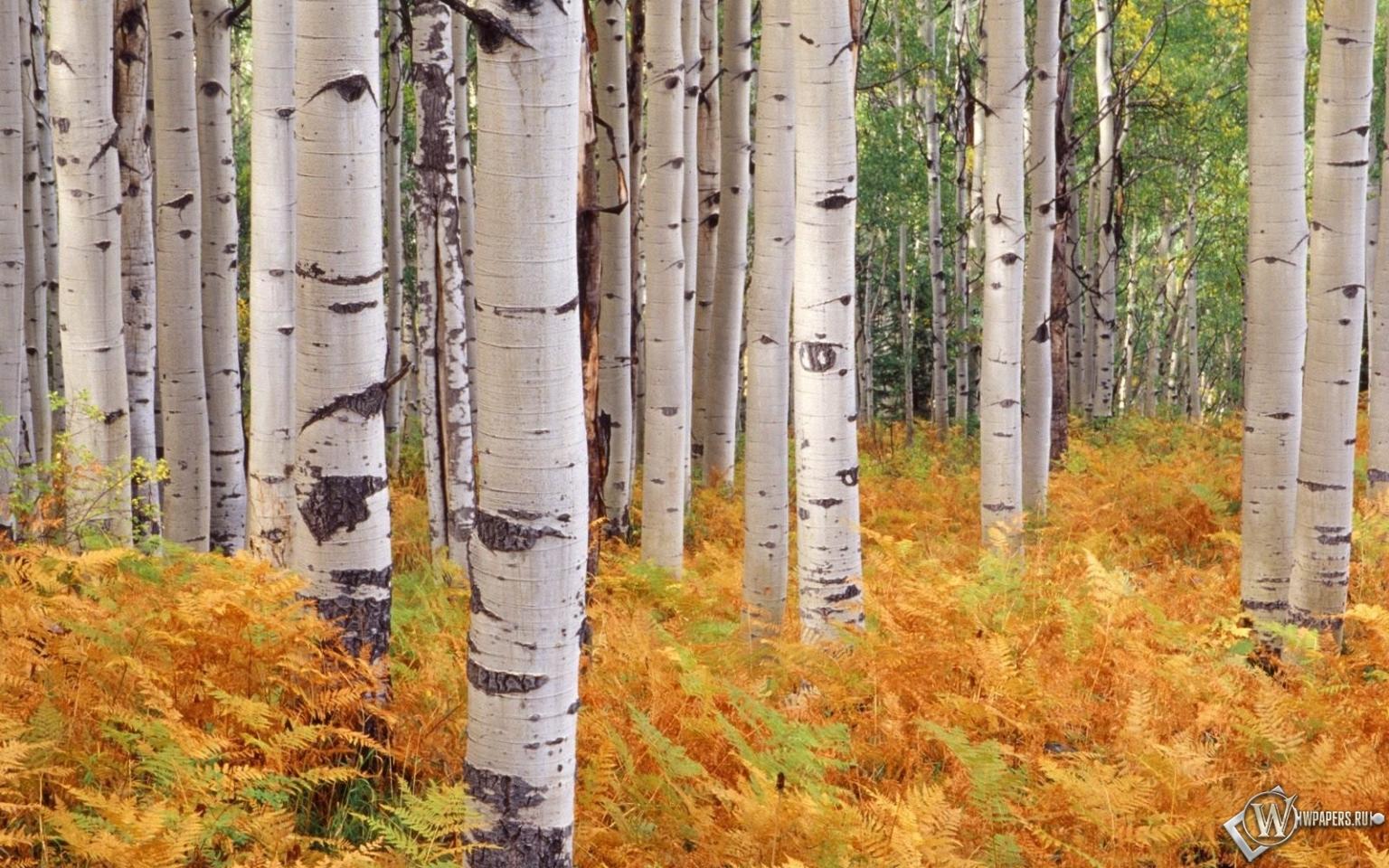 В осеннем лесу на рабочий стол с
