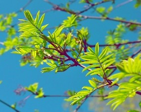 Обои Зелень: Ветка, Листочки, Деревья