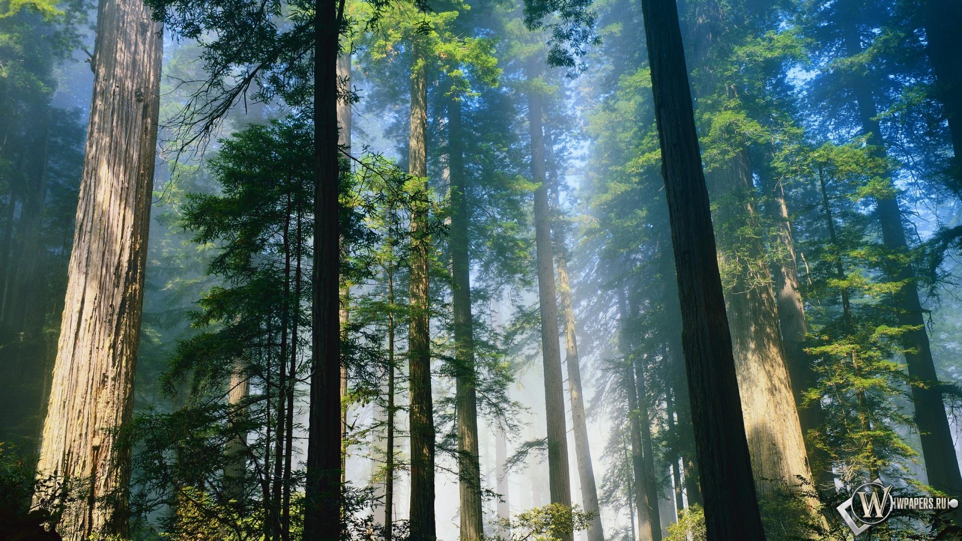 свет обоев 138 лес обоев 261 лето обоев ...: wpapers.ru/wallpapers/Plants/Forest/10897/1920-1080_Лес.html