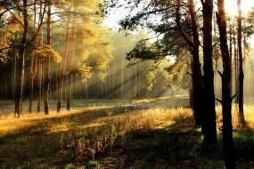 Обои Утренний лес: Лес, Утро, Деревья