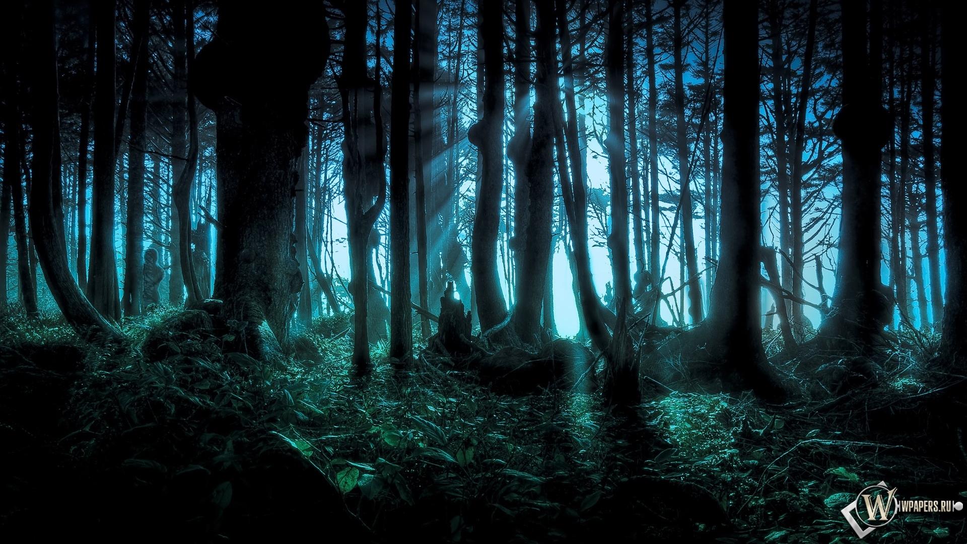 Обои лес на рабочий стол с разрешением