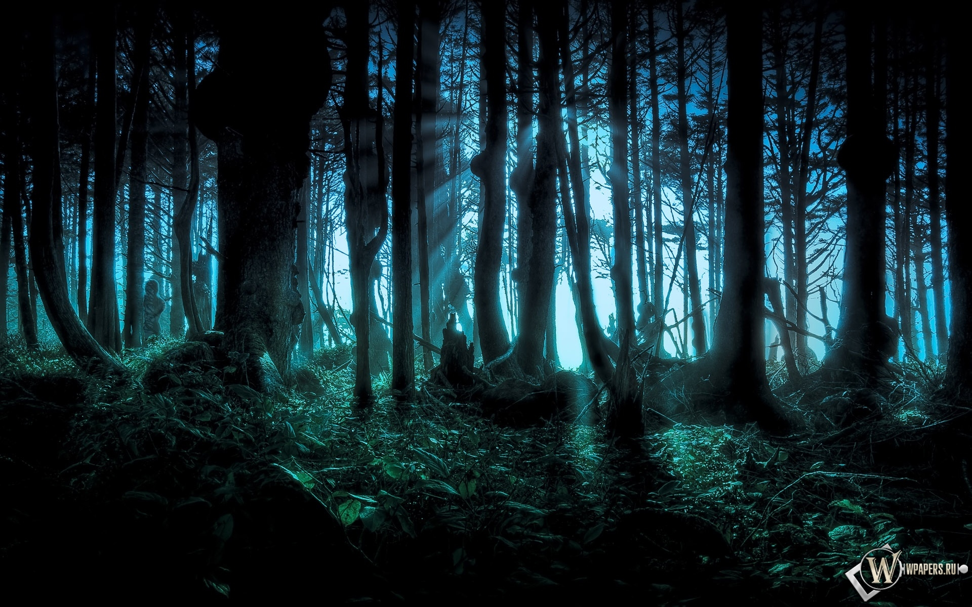 Обои лес лес деревья мрак 1920x1200