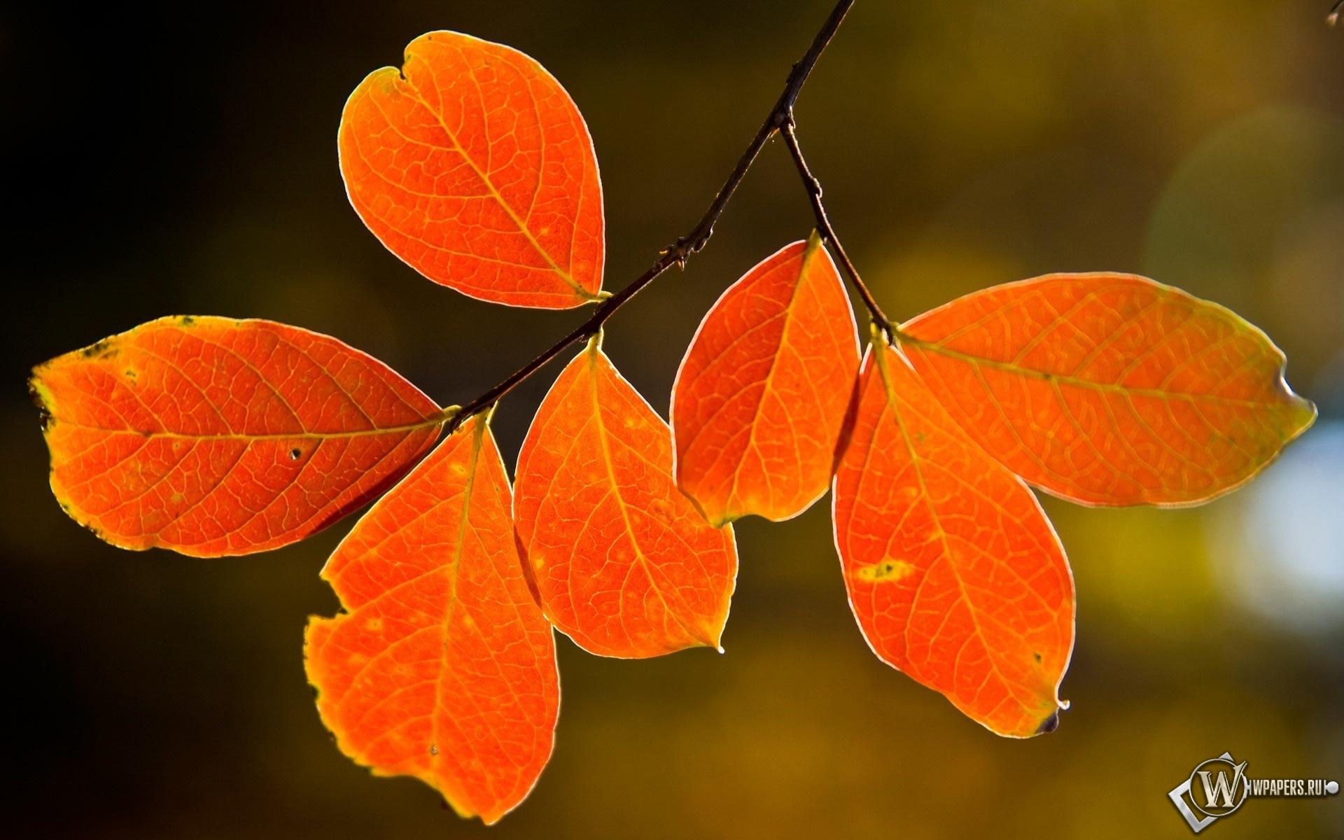 Осенние листья 1920x1200