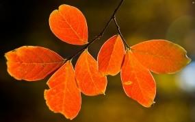 Обои Осенние листья: Осень, Дерево, Макро, Листья, Деревья