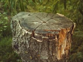 Обои Пень: Кора, Пень, Деревья