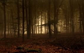 Обои Лесная чаща: Лес, Деревья, Туман, Ветки, Деревья