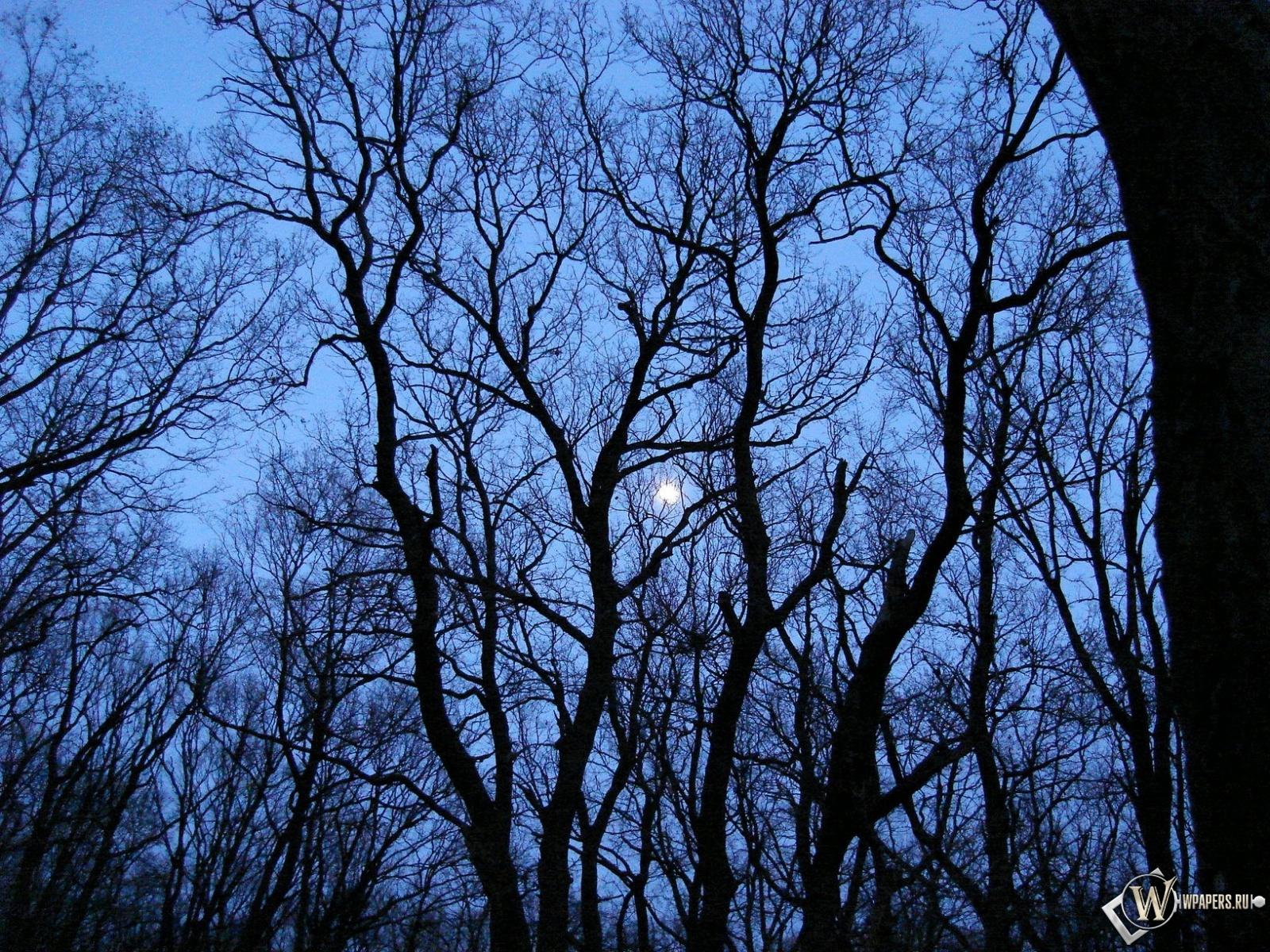 Луна за деревьями 1600x1200