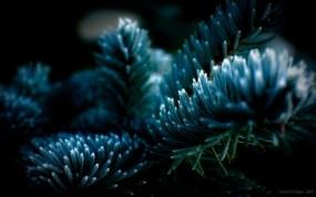 Обои Голубая ель: Дерево, Ель, Иголки, Деревья