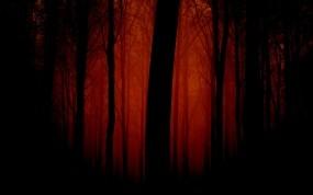 Обои Мрачный лес: Лес, Деревья, Мрак, Вечер, Деревья