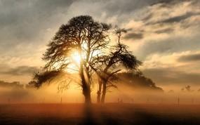 Обои Солнце за деревом: Свет, Солнце, Дерево, Лучи, Деревья
