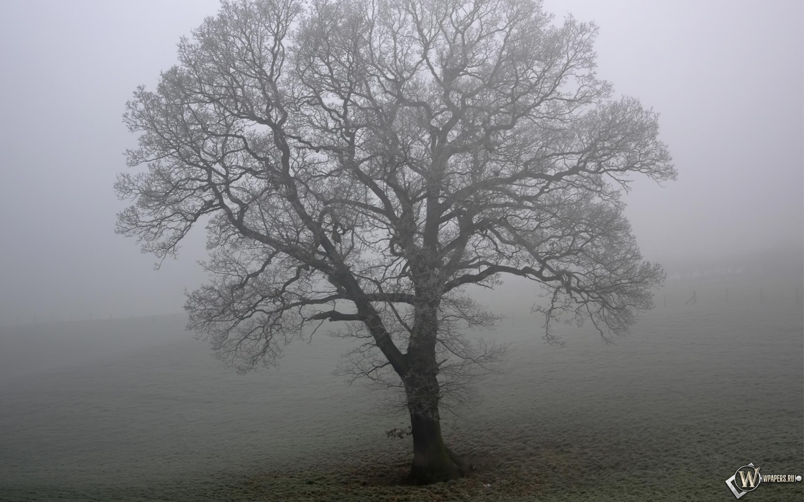 Дерево в тумане 2560x1600