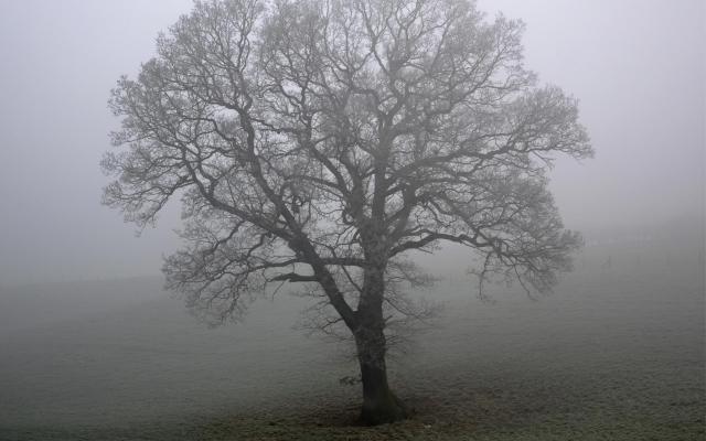 Дерево в тумане