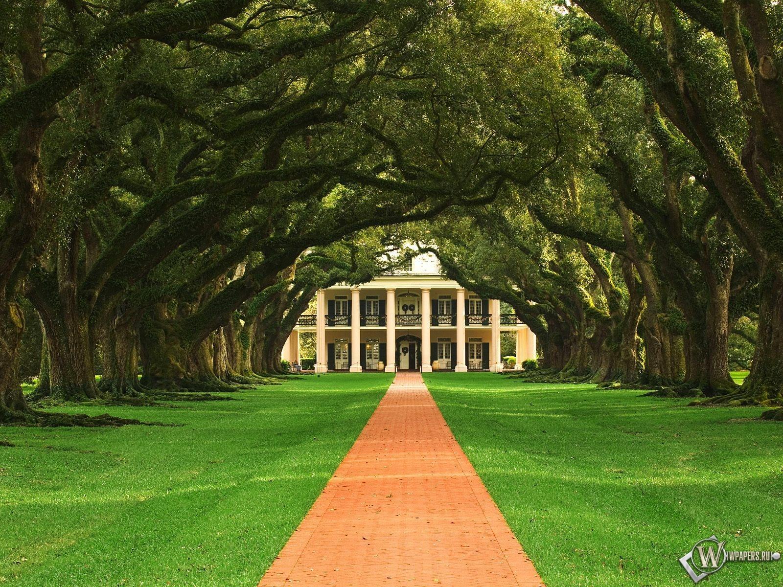 Дубовая аллея в Луизиане 1600x1200