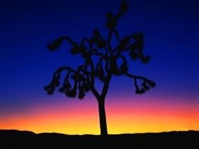 Обои Контрастное дерево: Закат, Дерево, Деревья