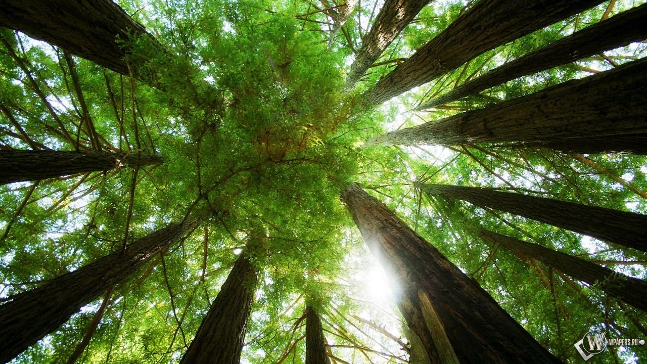 Обои лес изнутри лес деревья
