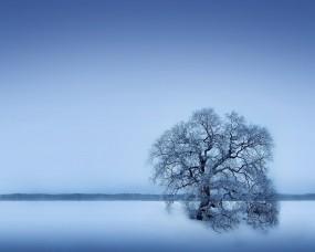 Обои Одинокое дерево: Зима, Снег, Дерево, Деревья