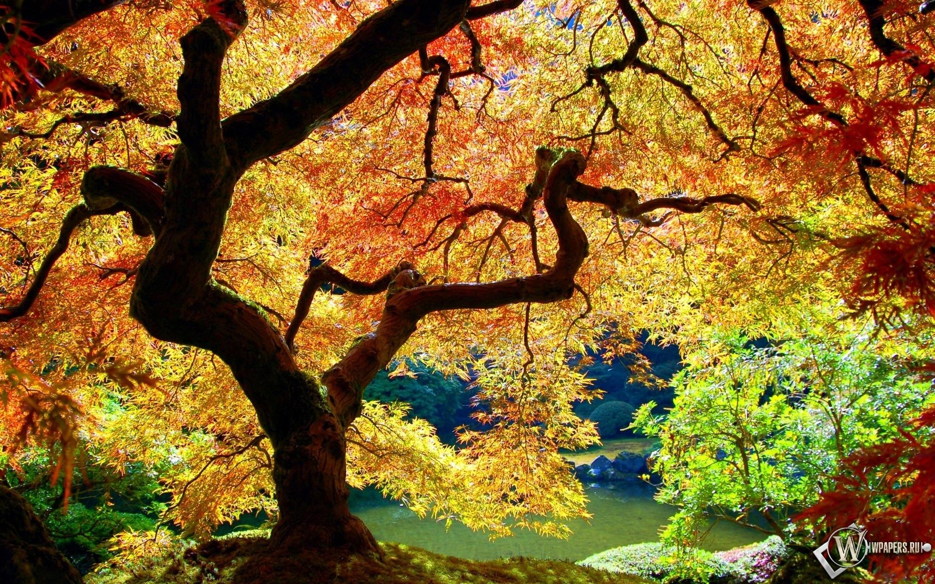 Осеннее дерево 1920x1200