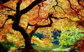 Обои Осеннее дерево: Осень, Дерево, Листья, Деревья