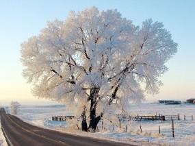 Обои Дерево в снегу: Зима, Дорога, Природа, Иней, Дерево, Небо, Деревья