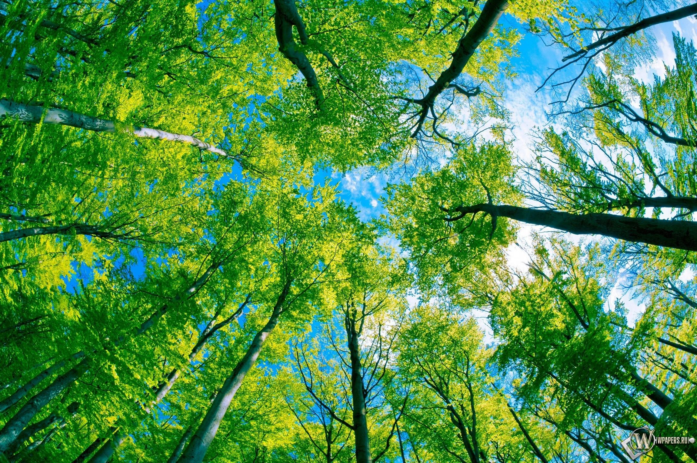Под деревьями 2300x1530