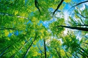 Обои Под деревьями: Лес, Деревья, Небо, Деревья
