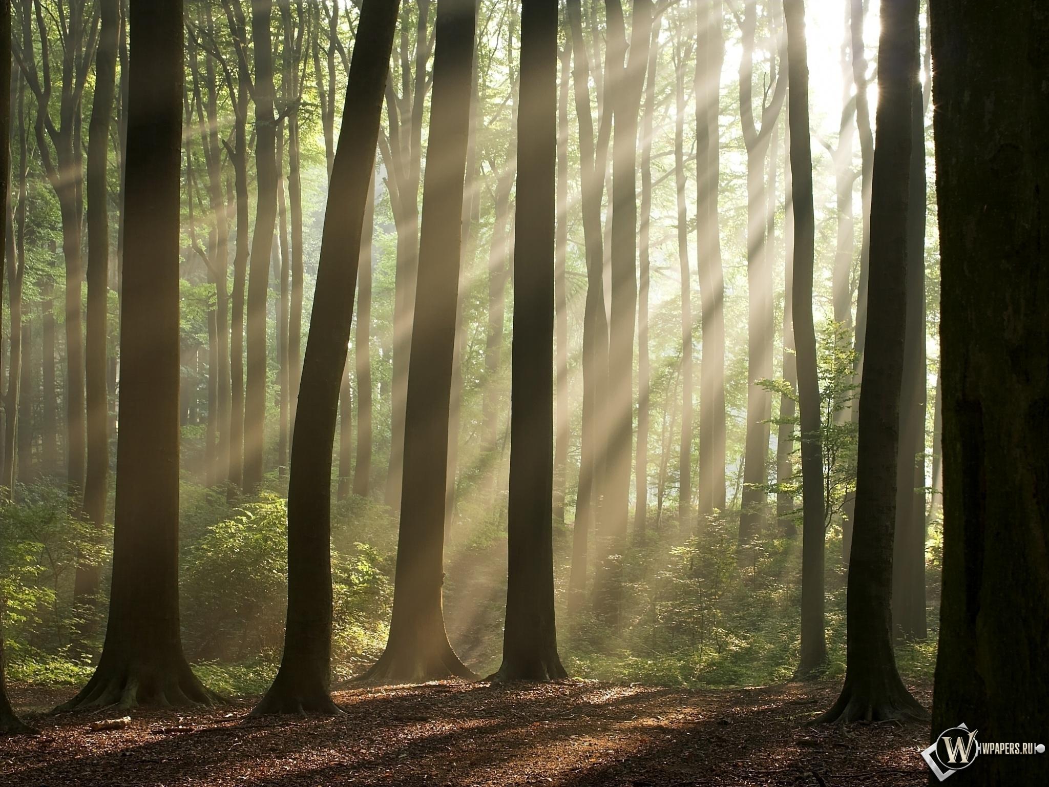 Утренний лес 2048x1536