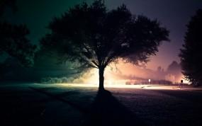 Обои Ночное дерево: Свет, Дорога, Ночь, Дерево, Улица, Деревья