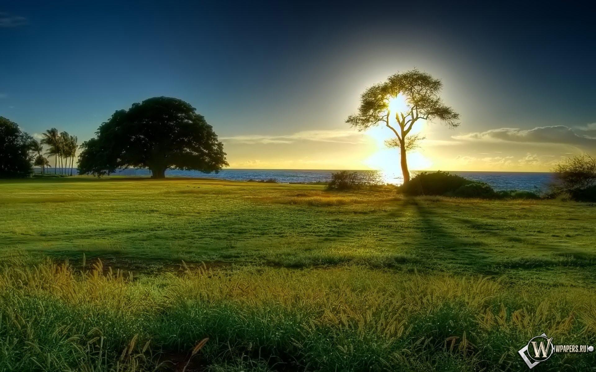 Дерево на поляне 1920x1200