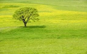 Обои Meadow tree: Зелень, Дерево, Трава, Деревья
