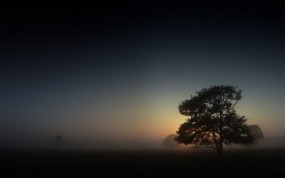 Обои Ранним утром: Туман, Дерево, Небо, Утро, Деревья
