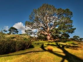 Обои Вековое дерево: Кусты, Дерево, Трава, Небо, Листья, Деревья