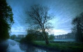 Обои Деревья в тумане: Пруд, Дерево, Небо, Деревья