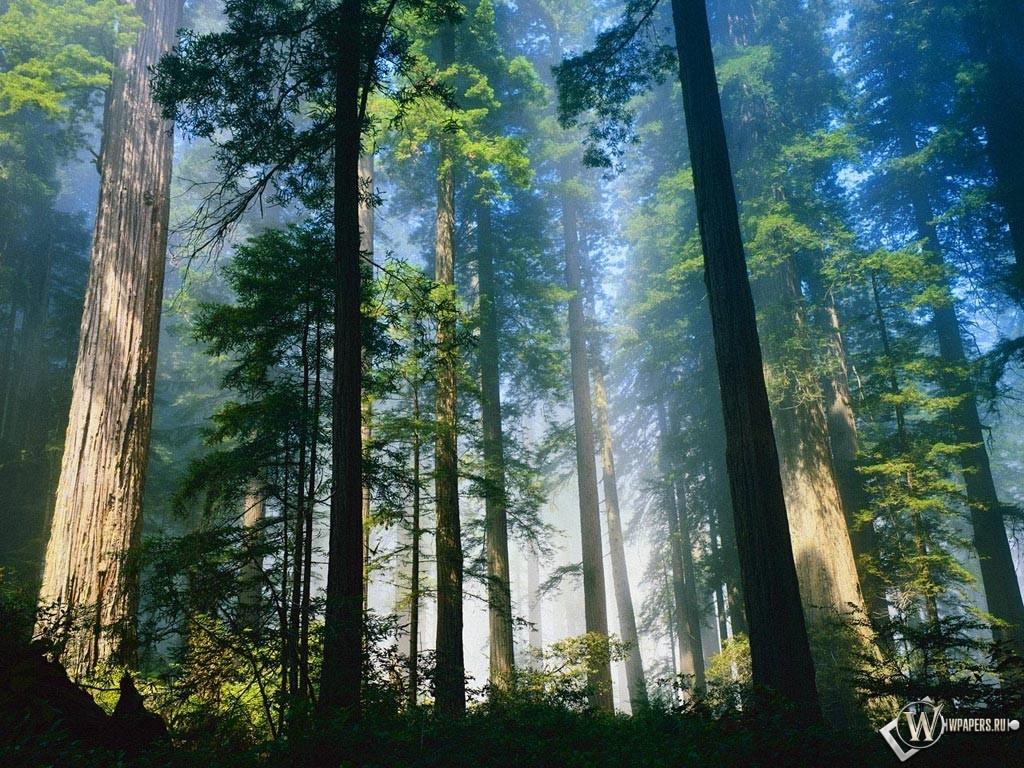 Загадочный лес 1024x768