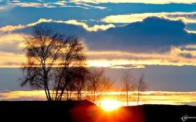 Обои Рассвет: Деревья, Солнце, Рассвет, Деревья