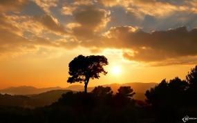 Обои Солнце садится: Солнце, Дерево, Небо, Деревья