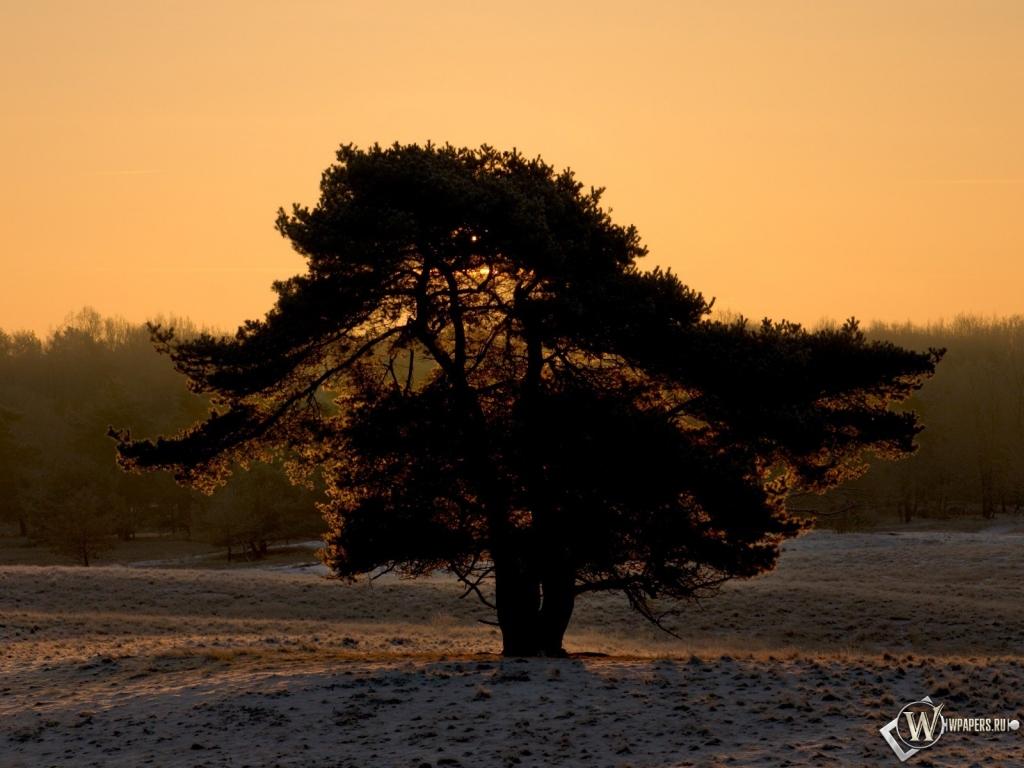 Дерево зима снег силуэт дерево