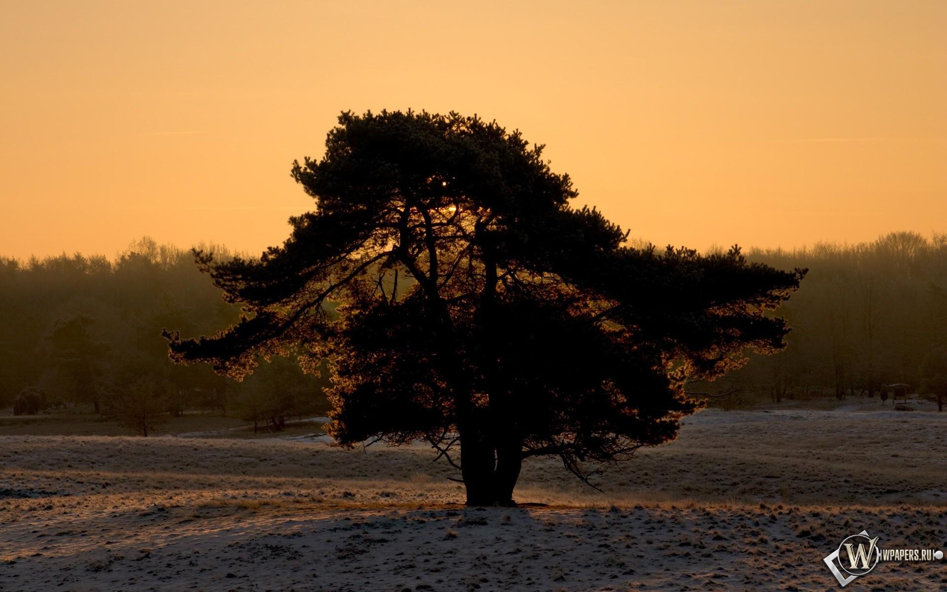 Одинокое дерево 1920x1200