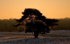 Обои Одинокое дерево: Зима, Снег, Силуэт, Дерево, Деревья